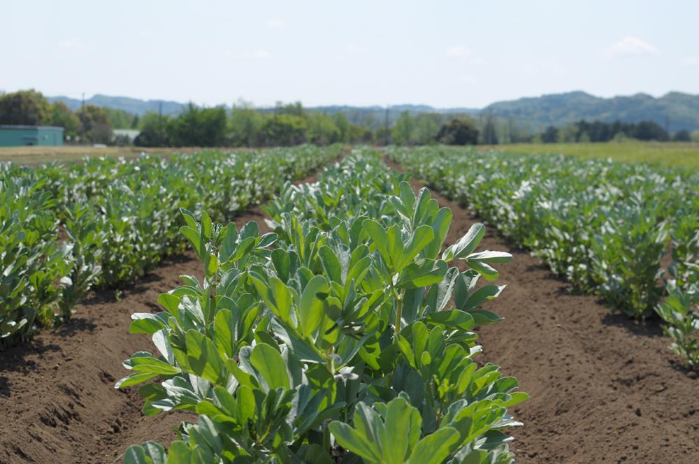 千葉で体験農園