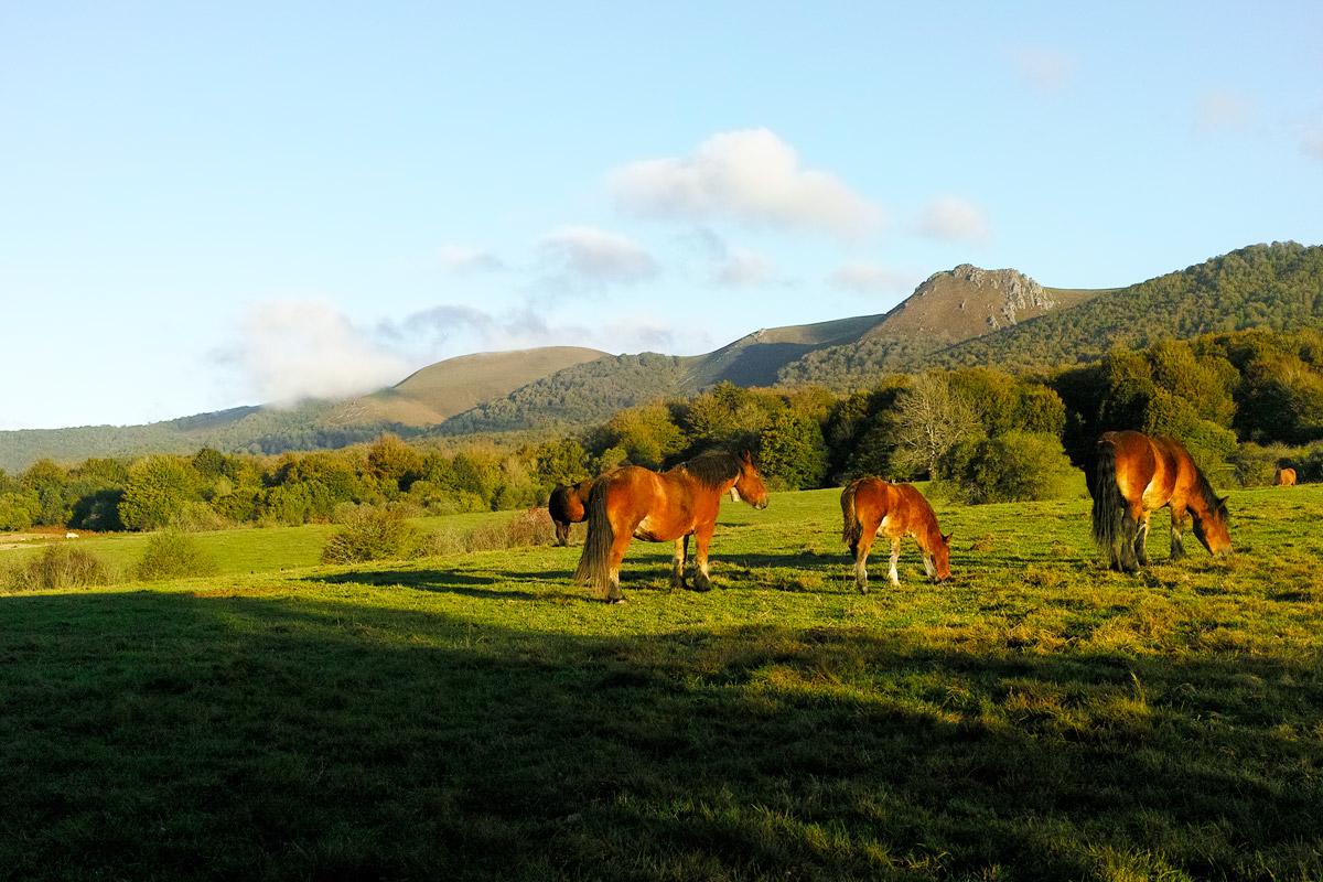 牧場とピレネー